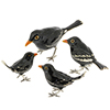 Offord & Sons | Saturno silver enamelled Blackbirds