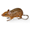Offord & Sons | Saturno Silver Enamelled Large Mouse