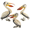 Offord & Sons | Saturno silver enamelled Pelicans