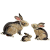 Saturno family of rabbits