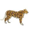 Saturno enamelled Leopard